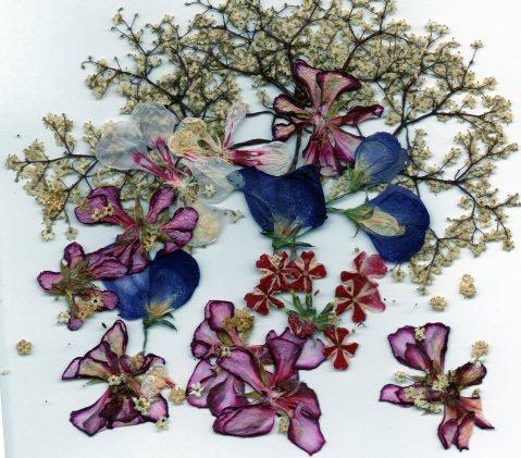 spring petals005
