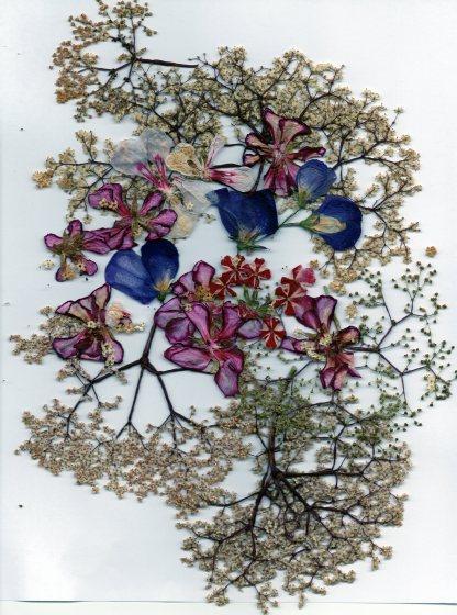 spring petals006